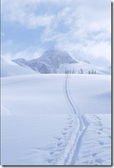 horizon pic - snow tracks